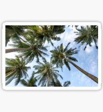 Palm tree coast Sticker
