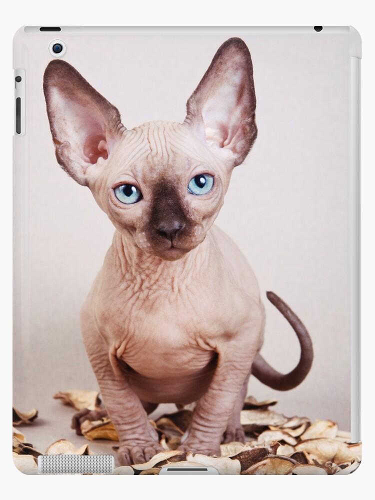 'Sphynx kitten with blue eyes, no hair' iPad Case/Skin by utekhina
