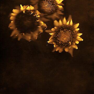 Sunflowers by dandelionimage