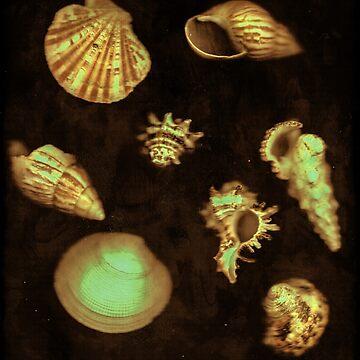 Sea Shells  by dandelionimage