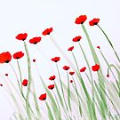 Poppies  by Charisse Colbert