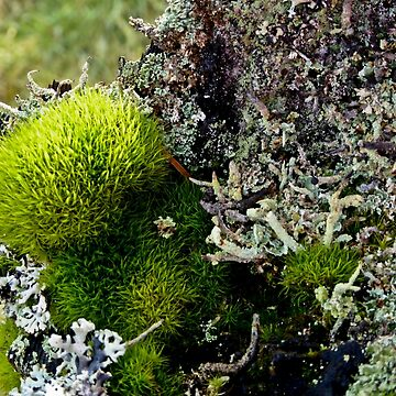 A MINIATURE WORLD OF MOSS AND LICHEN! by elainebawden
