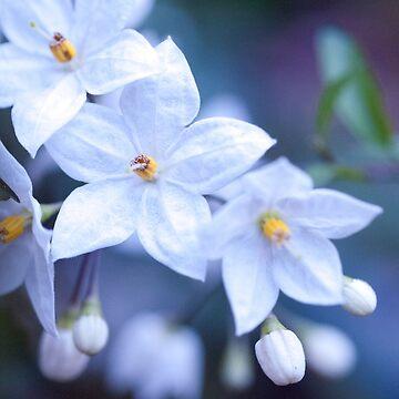 Jasmine Nightshade Flowers #3 #floral #art  by anitabellajantz