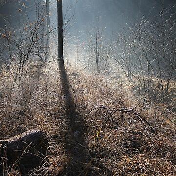 Winter Wonderland by cuprum