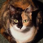Cinders the Calico Cat by AnnDixon