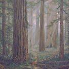 Redwoods by Dan Budde