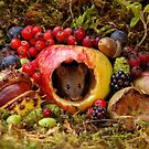 Autumn wild mouse inside a apple with natures bounty  by Simon-dell