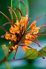 Orange Marmalade by Renee Hubbard Fine Art Photography
