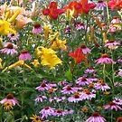 Flowers Growing Wild by Linda Miller Gesualdo