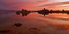 Mono Lake at Dawn by Zane Paxton
