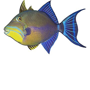 Queen Triggerfish by blueshore