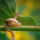 Snail's Pace by David Lamb