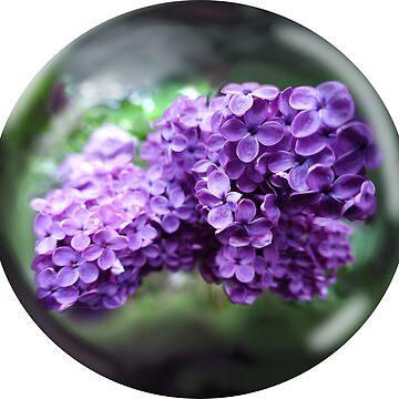 Lilac Globe by Mount-Cynthus