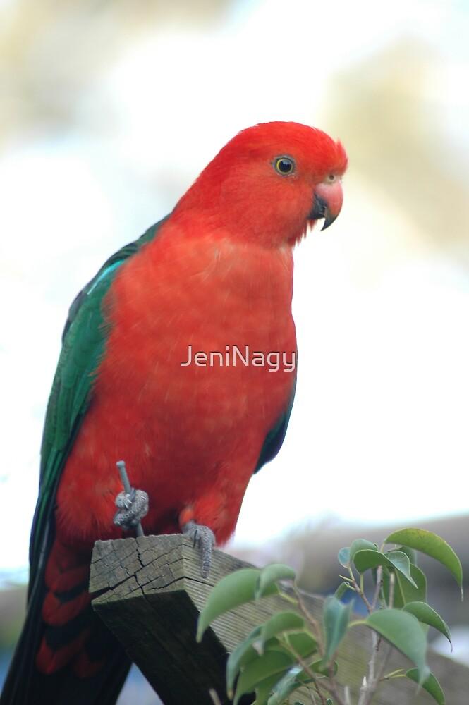King Parrot by JeniNagy