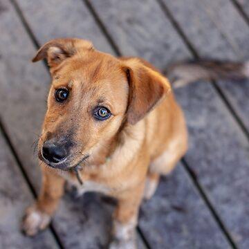 Max The Pupper by MattHutzell