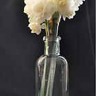 Narcissus 'Erlicheer' by Julie Sherlock