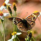 Butterflies by Arla M. Ruggles