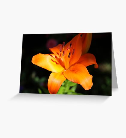 Evening Lily Greeting Card