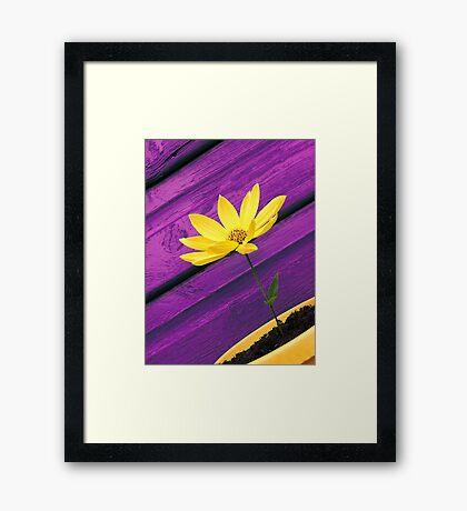 Purple Daze Framed Print