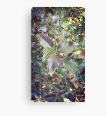 Holly Sprig Canvas Print