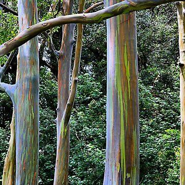 Eucalyptus Paradise by djphoto