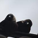 Birds by ioandavies
