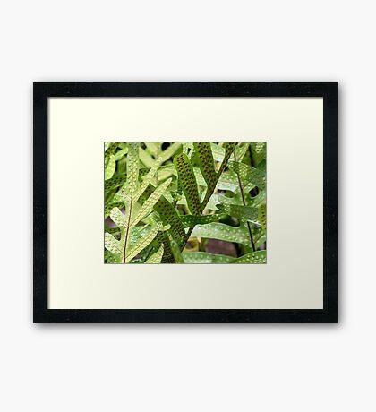 Hawai'an Ferns Framed Print