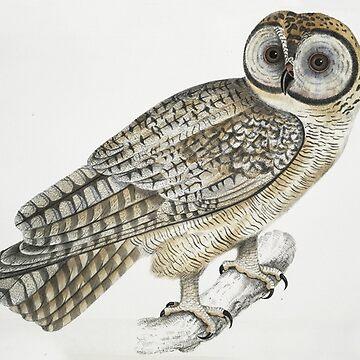 Tawny Owl by Geekimpact
