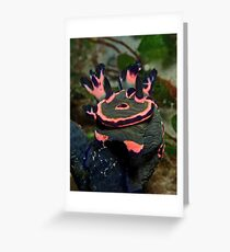 Donut Nembrotha Greeting Card