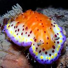 Bright and Colourful Nudibranch by daveharasti