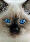 Sasha's Eyes by Extraordinary Light