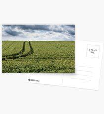 J Wheat Field Postcards