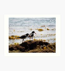 birds #18, their better be something under this seaweed Art Print
