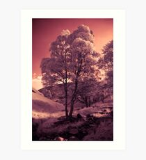 Walking in the Dream Wood - The Hill Art Print