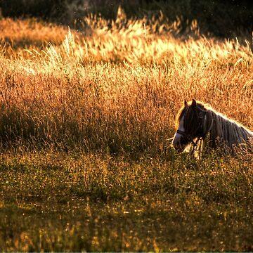 Golden Hour Pony by Nigdaw