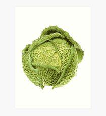 Savoy Cabbage Art Print