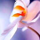 white orchid macro by jayantilalparma