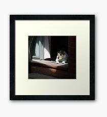 My spot Framed Print