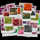 Roses And Flowers by Linda Miller Gesualdo