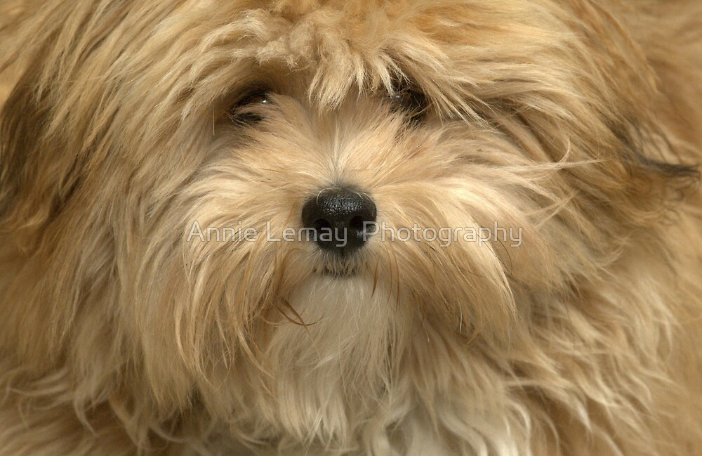 Gizmo by Annie Lemay  Photography