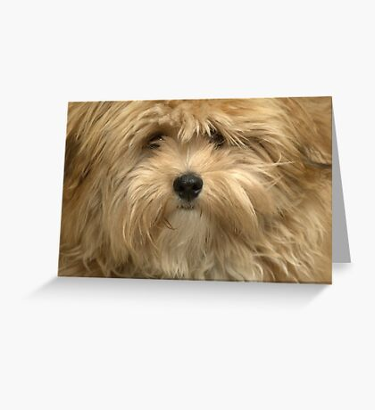 Gizmo Greeting Card