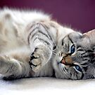 Lazy by Adrienne Berner