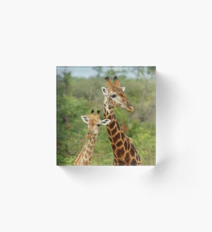 THE HAPPY COUPLE - GIRAFFE – Giraffa Camelopardalis Acrylic Block