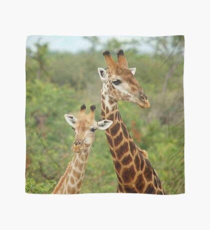 THE HAPPY COUPLE - GIRAFFE – Giraffa Camelopardalis Scarf