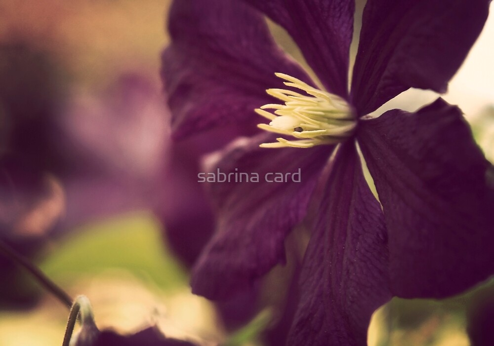 is the poetry by sabrina card