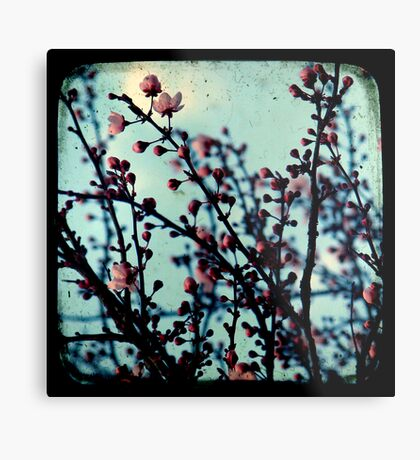 Spring Blossoms Through The Viewfinder - TTV Metal Print