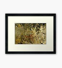 Mourning Cuttlefish Framed Print