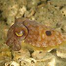 Reaper Cuttlefish by Andrew Trevor-Jones
