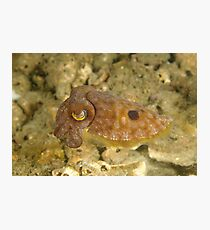 Reaper Cuttlefish Photographic Print