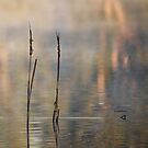 Reeds and reflections by nadine henley